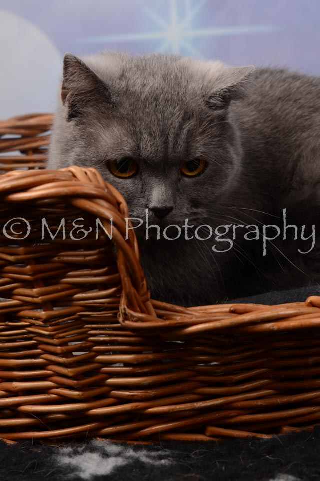 M&N Photography -DSC_6986