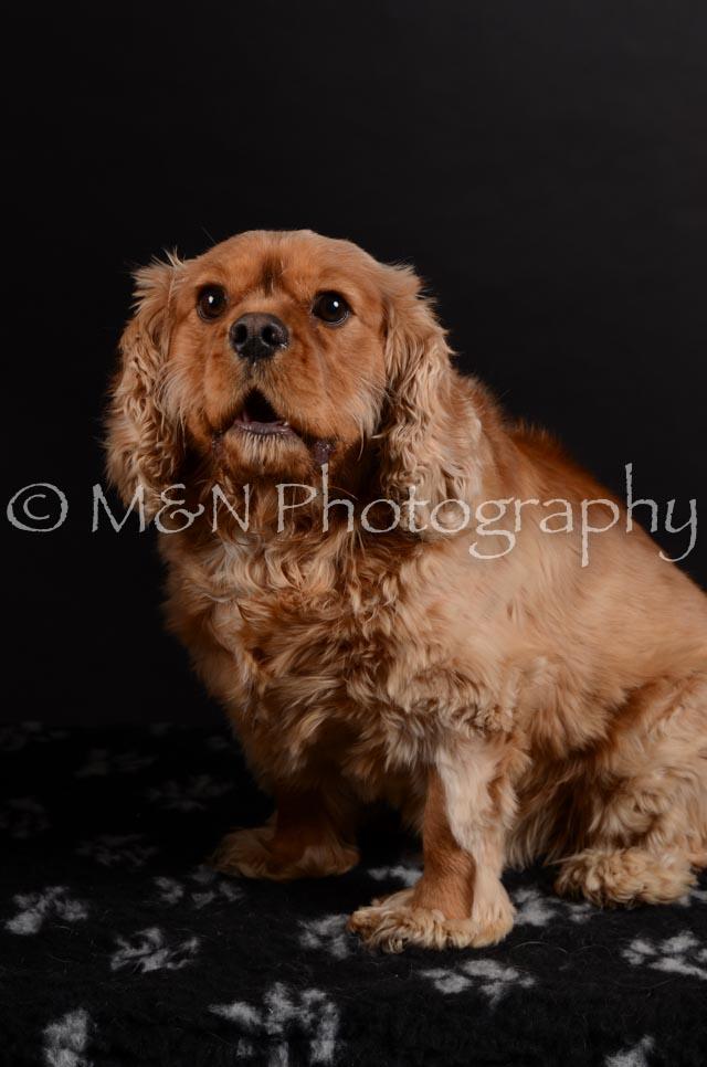M&N Photography -DSC_5953