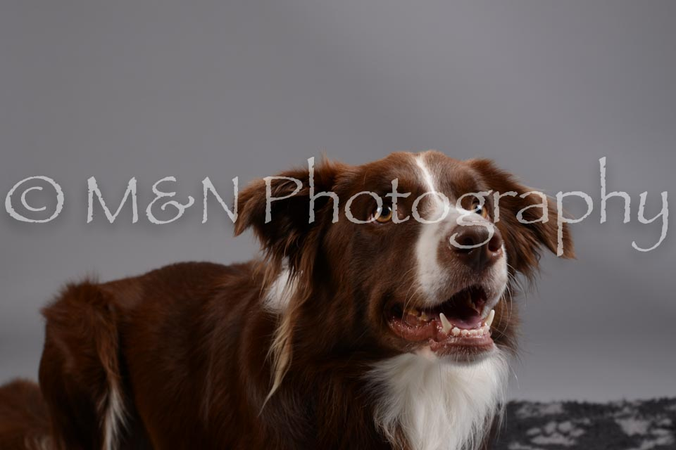 M&N Photography -DSC_1456