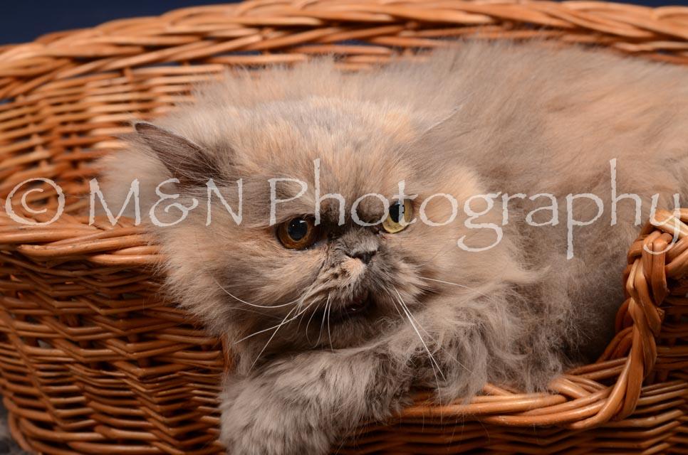 M&N Photography -DSC_0515