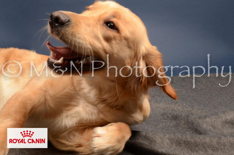 M&N Photography -DSC_4150-2