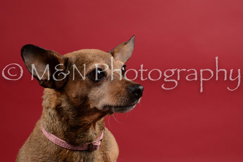 M&N Photography -DSC_8657