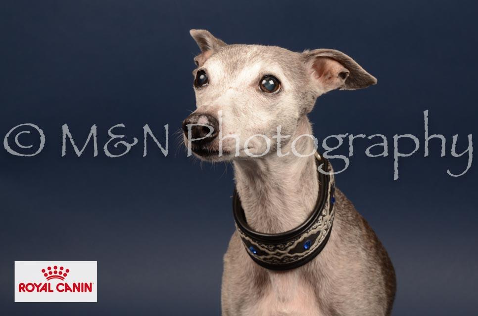 M&N Photography -DSC_4605-2