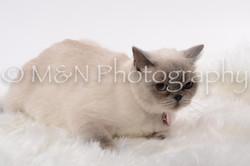 M&N Photography -DSC_8795