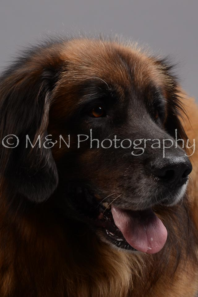 M&N Photography -DSC_2663