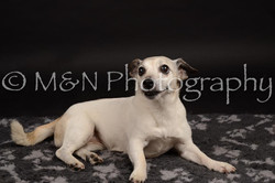M&N Photography -DSC_0105