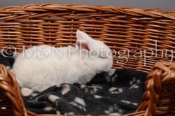 M&N Photography -DSC_1687