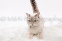 M&N Photography -DSC_8804