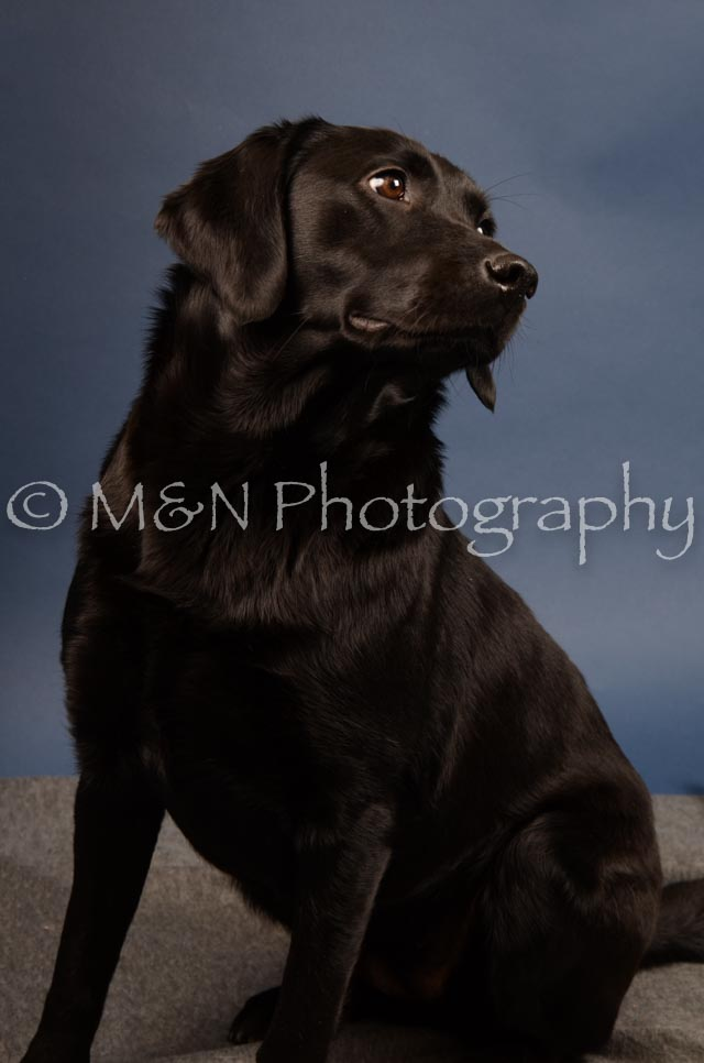 M&N Photography -DSC_4329