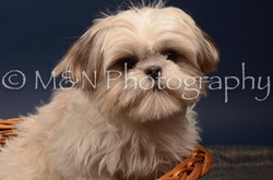 M&N Photography -DSC_4723
