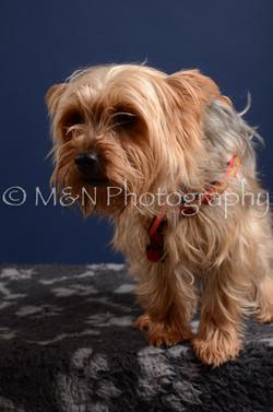 M&N Photography -DSC_3877
