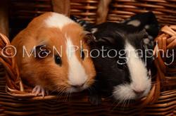 M&N Photography -DSC_4736