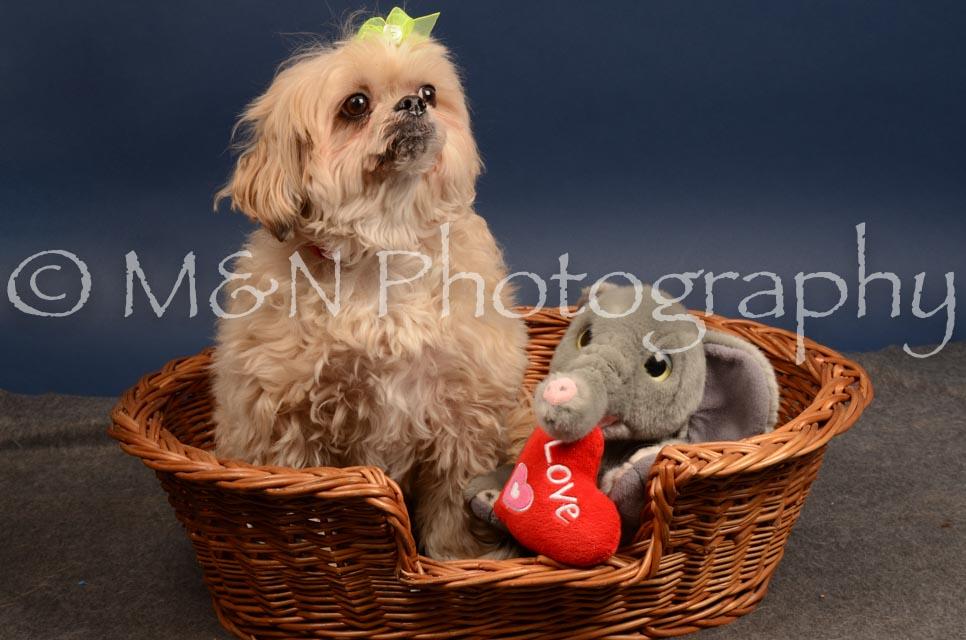M&N Photography -DSC_4484