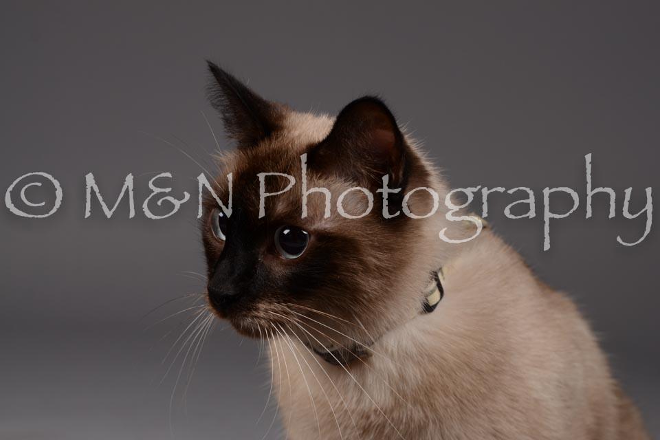 M&N Photography -DSC_2255