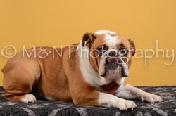 M&N Photography -DSC_4623