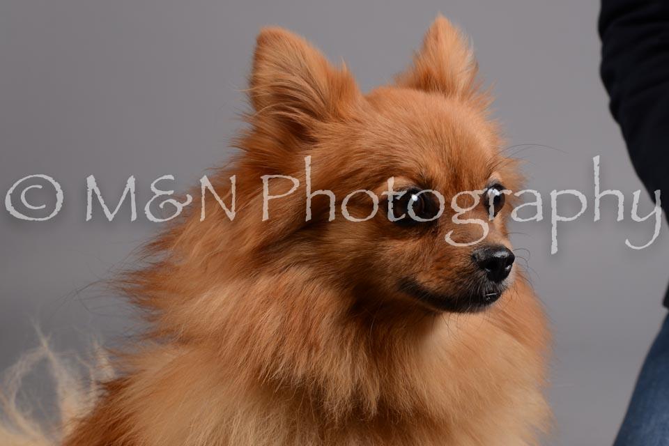 M&N Photography -DSC_2524