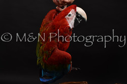 M&N Photography -DSC_2699