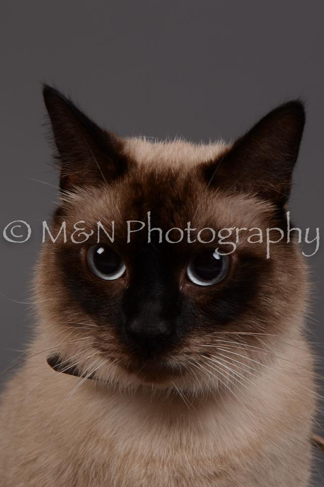 M&N Photography -DSC_2262