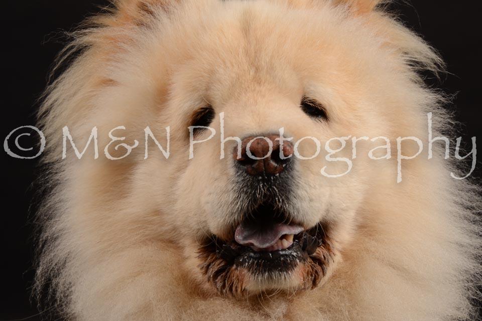 M&N Photography -DSC_9689