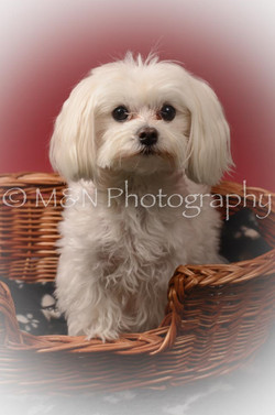 M&N Photography -DSC_6821-2