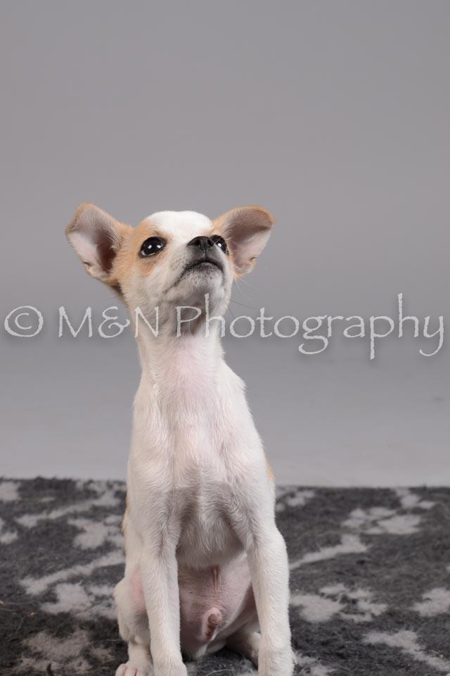 M&N Photography -DSC_2417