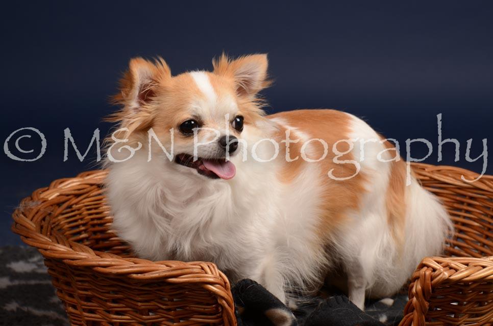 M&N Photography -DSC_0595