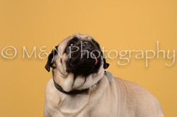 M&N Photography -DSC_4666