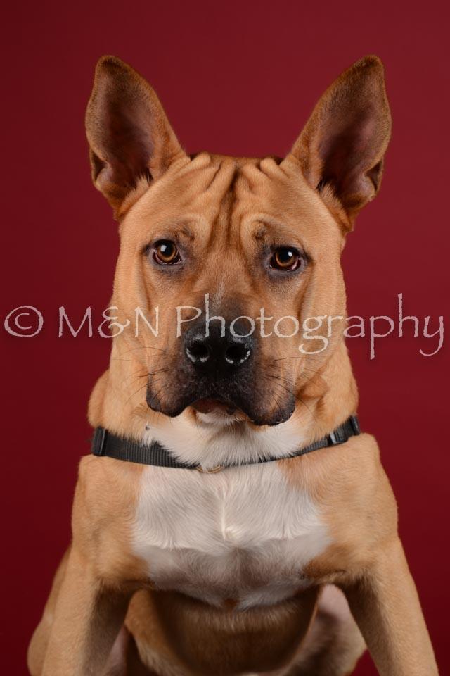 M&N Photography -DSC_3200