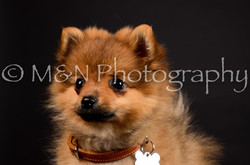 M&N Photography -DSC_5679