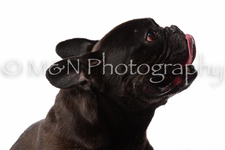 M&N Photography -DSC_9020