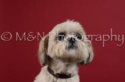 M&N Photography -DSC_3543