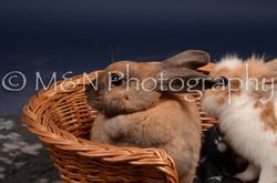 M&N Photography -DSC_0772