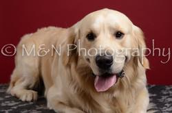 M&N Photography -DSC_3707