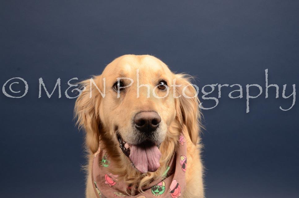 M&N Photography -DSC_4371