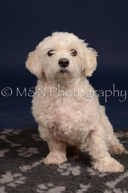 M&N Photography -DSC_0388
