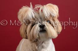 M&N Photography -DSC_3087