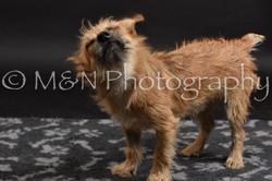 M&N Photography -DSC_2533