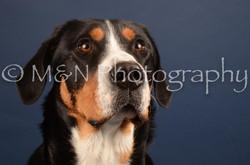 M&N Photography -DSC_4428