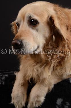 M&N Photography -DSC_5492