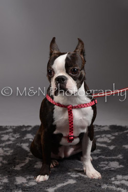 M&N Photography -DSC_2395