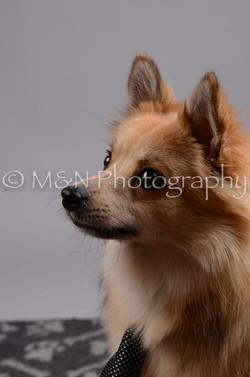 M&N Photography -DSC_2724