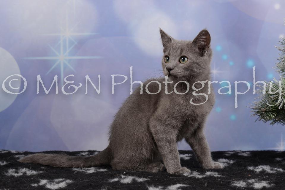 M&N Photography -DSC_6546