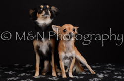 M&N Photography -DSC_5750