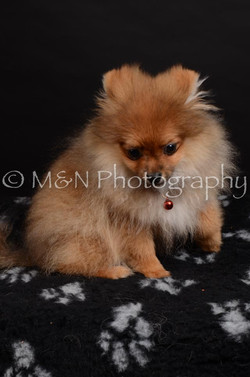 M&N Photography -DSC_5821