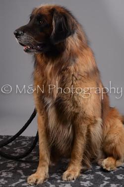M&N Photography -DSC_2665