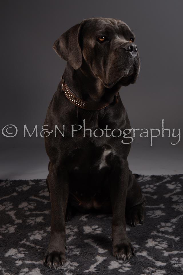 M&N Photography -DSC_2170