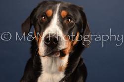 M&N Photography -DSC_4423