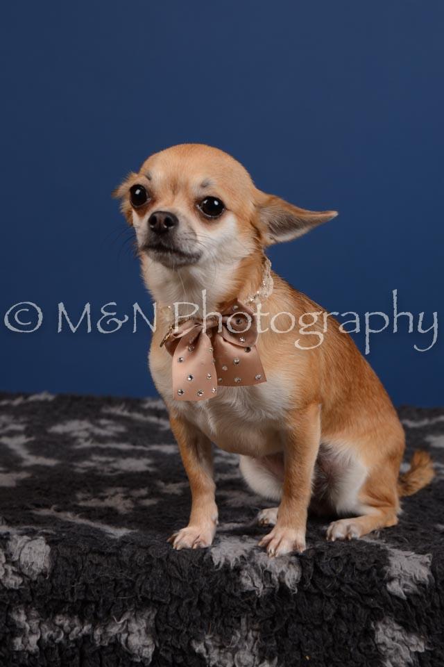 M&N Photography -DSC_5298