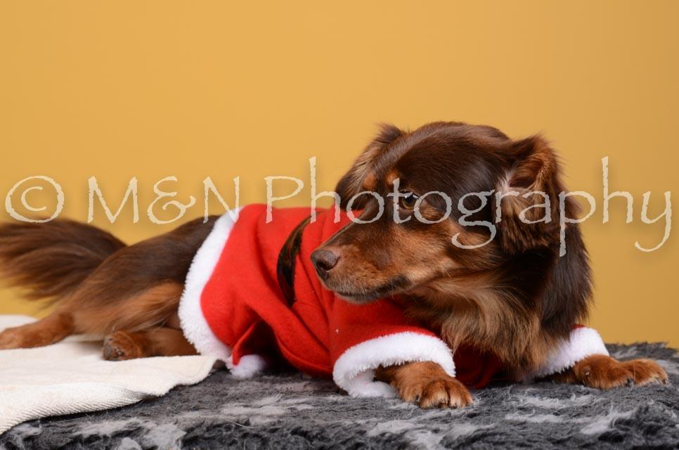 M&N Photography -DSC_4849
