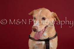 M&N Photography -DSC_3288